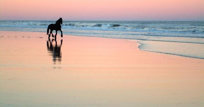 horse-beach-mural